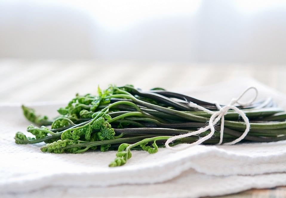 edible bracken fern fiddleheads