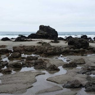 A tidepool in Sonoma