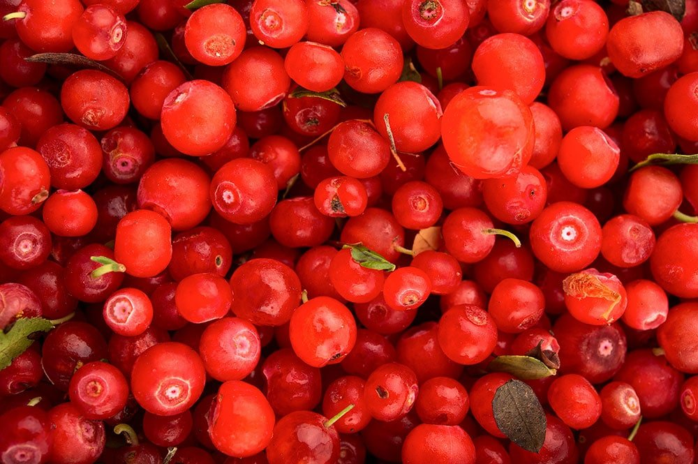 Close up of red huckleberries.