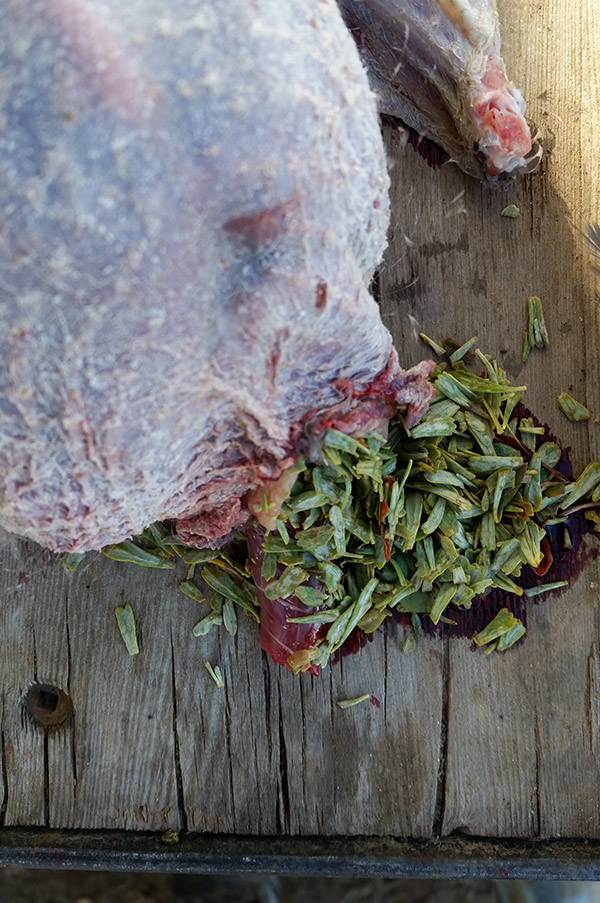 Contents of a sage grouse's crop. It's sagebrush leaves