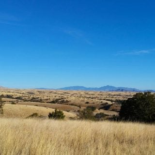 Mearns quail country