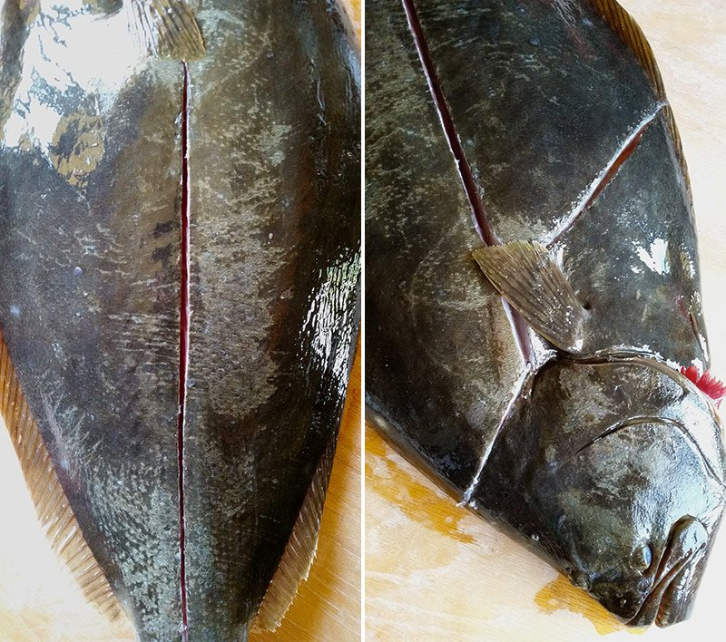 First cuts in how to fillet a flounder