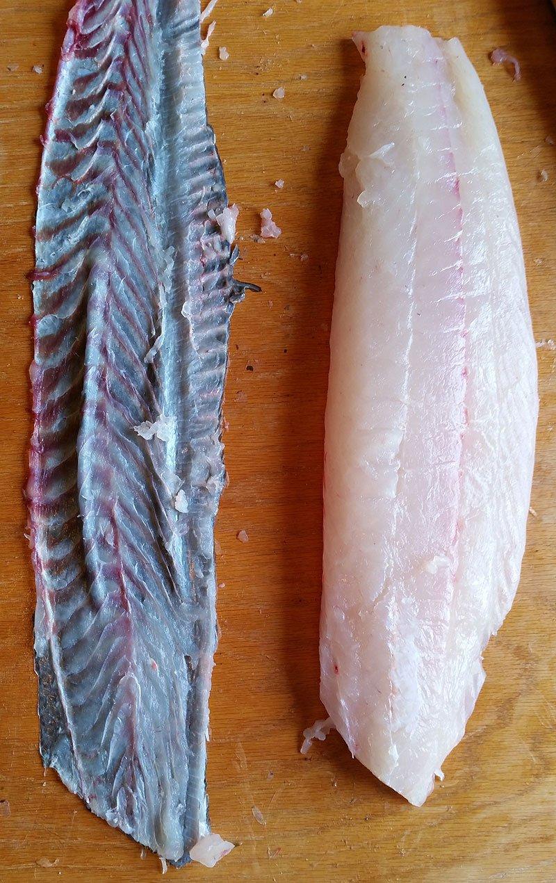 Skin removed from halibut fillet