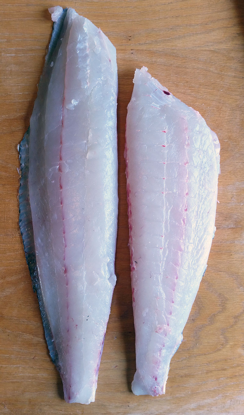 pretty top fillets from a flounder