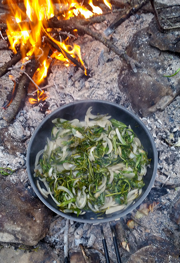 Fireweed greens, simmering in a pot.
