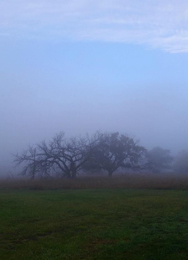 Foggy morning in Dakota