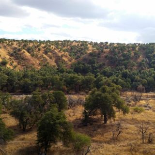A canyon in Arizona where I shot my Coues deer.