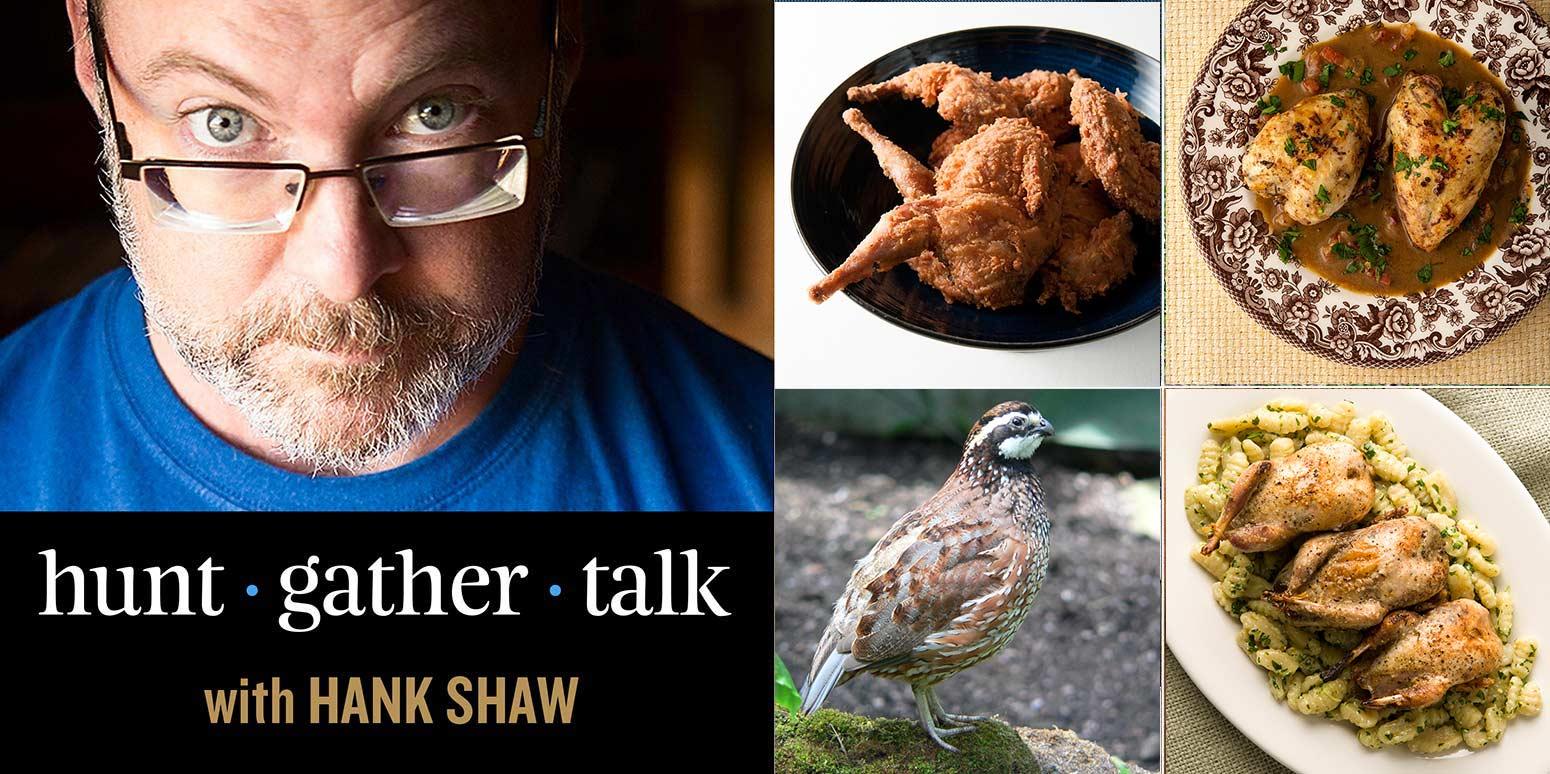 Bobwhite quail podcast cover art.