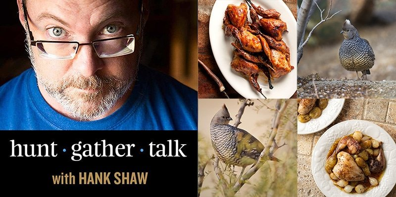 Hank Shaw podcast art scaled quail