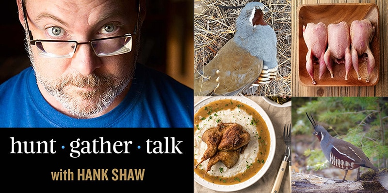 Hank Shaw podcast art mountain quail