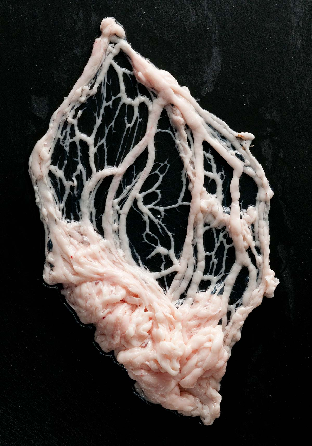 Artistic image of caul fat on a black background