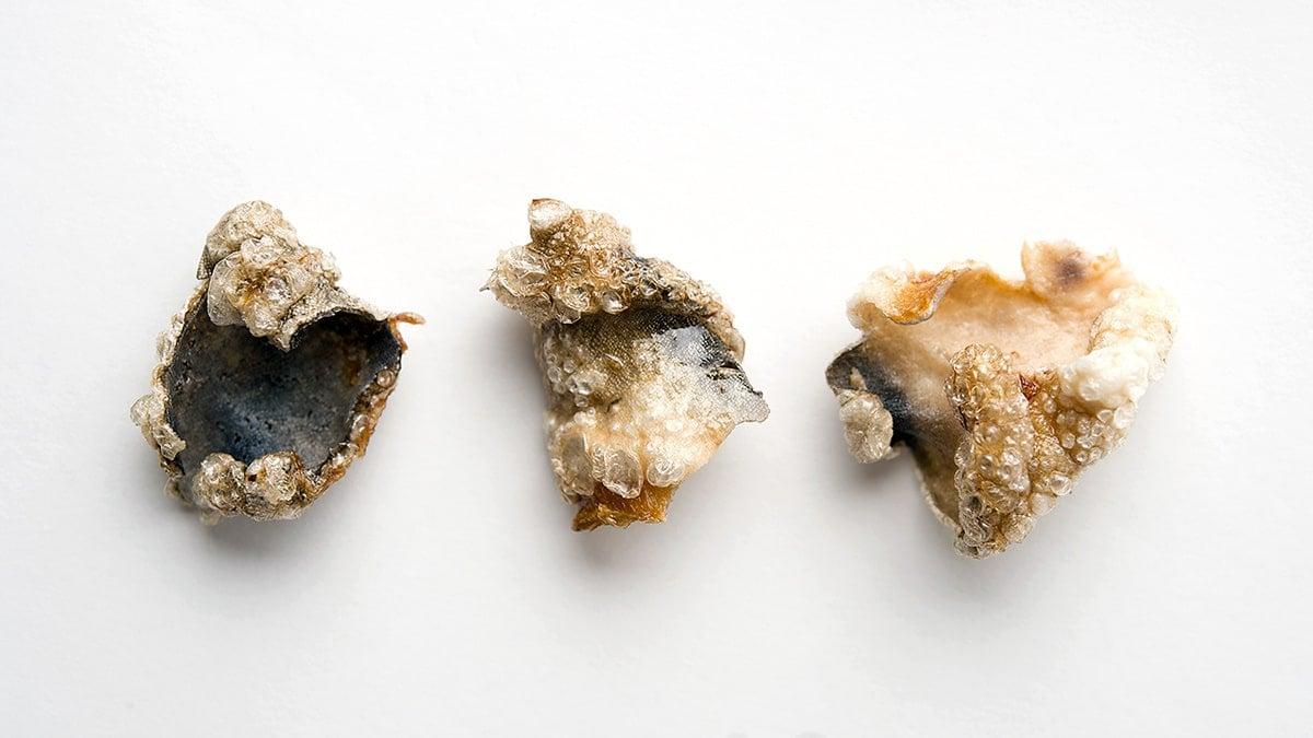 Crispy fish skin chicharrones