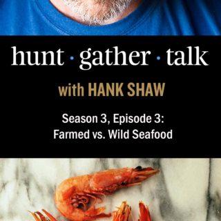 Podcast episode art with shrimp